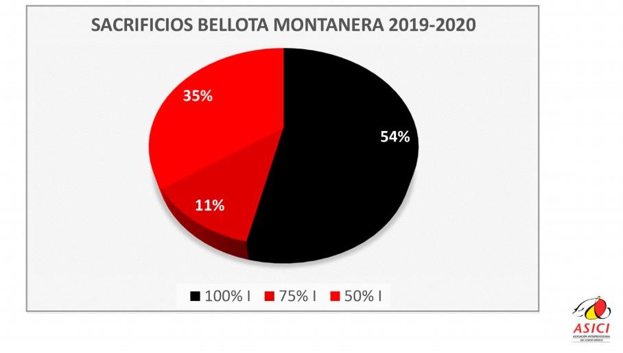 bellotamontanera2