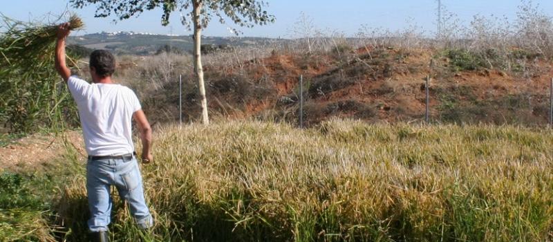 Actualizados los niveles de alerta sanitaria para la provincia de Sevilla