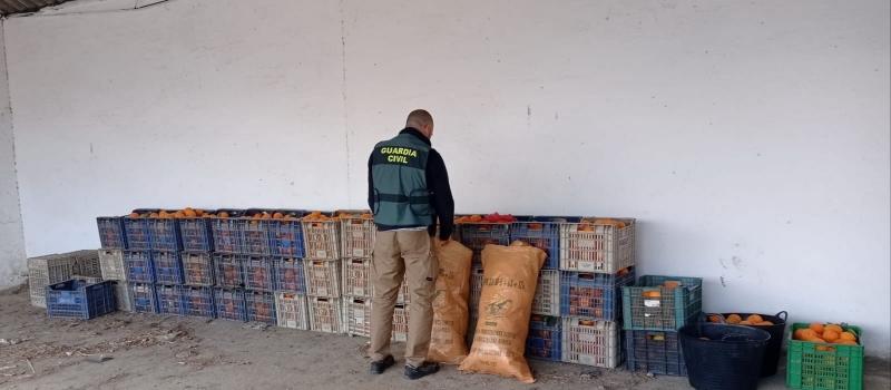 La Guardia Civil desarticula un grupo criminal dedicado a la sustracción de cítricos en la Vega…