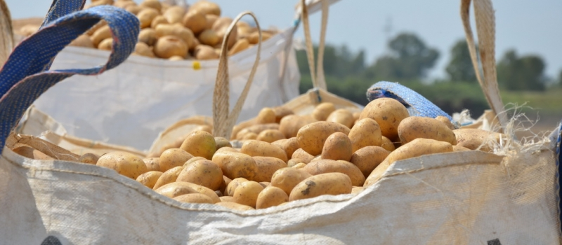Nueva campaña de promoción para animar a consumir patata nueva de Andalucía