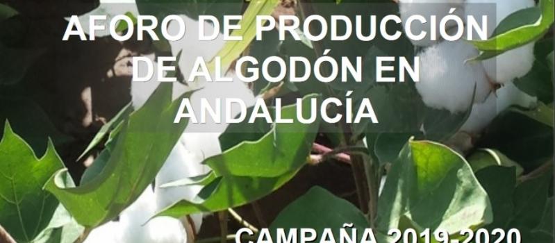 La campaña del algodón de Andalucía superará las 209.000 toneladas, un 6% más que la media…