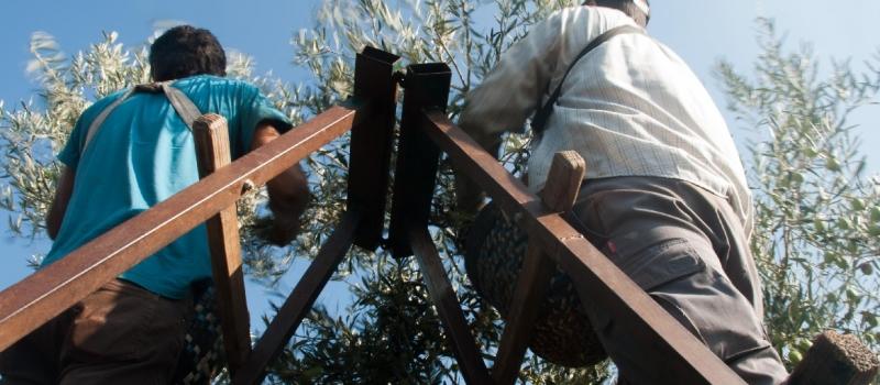 Medidas para prevenir el Covid-19 destinadas a trabajadores y empresarios agrícolas