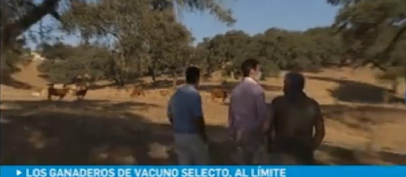 Ante su situación límite, ASAJA-Sevilla recuerda que si cae la ganadería extensiva, cae el ecosistema
