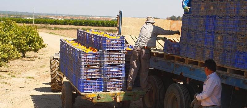 Nuevas normas en Andalucía por el COVID: ¿Cómo afectan a los desplazamientos para el sector agrario?