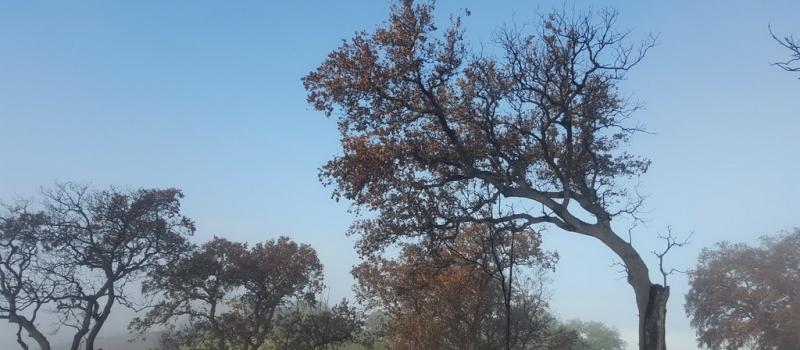 ASAJA exige la revisión de oficio de la resolución de las ayudas forestales ajustada a las…
