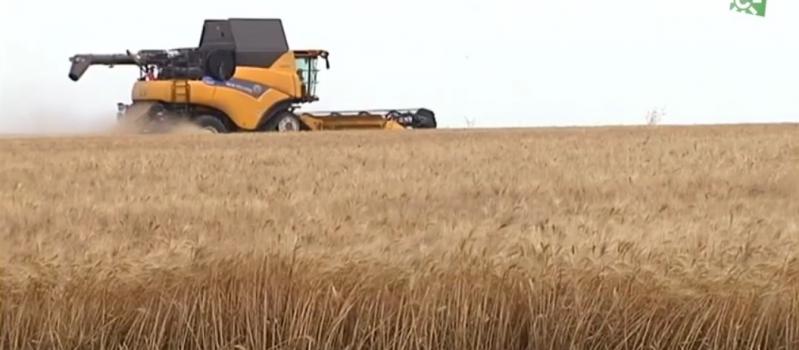 Toca a su fin una campaña de cereales corta pero de calidad