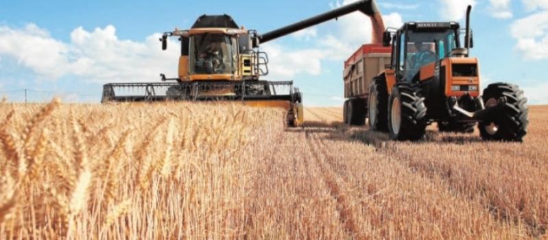 La cosecha corta y de buena calidad no garantizará los precios en el cereal