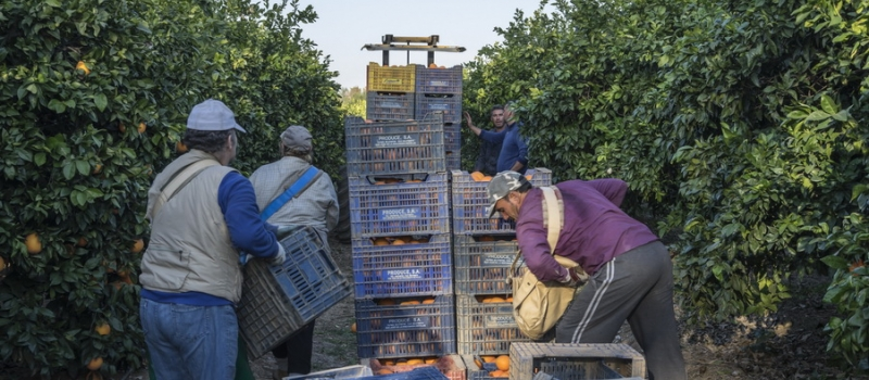 ¿Qué documentación es necesaria para la movilidad de los trabajadores agrarios?