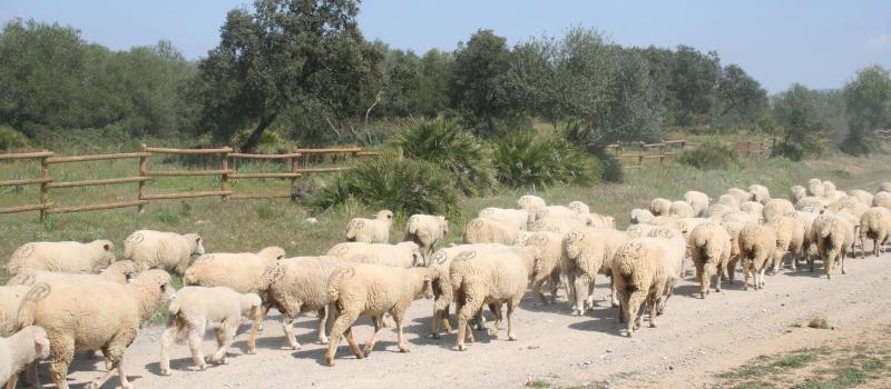 Fijado en 11,83 € por animal el importe definitivo de las ayudas asociadas a explotaciones de…