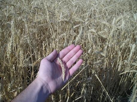 ¿Cuánto ha cobrado el agricultor por sus productos en la última semana? ¿Cuánto has pagado tú?