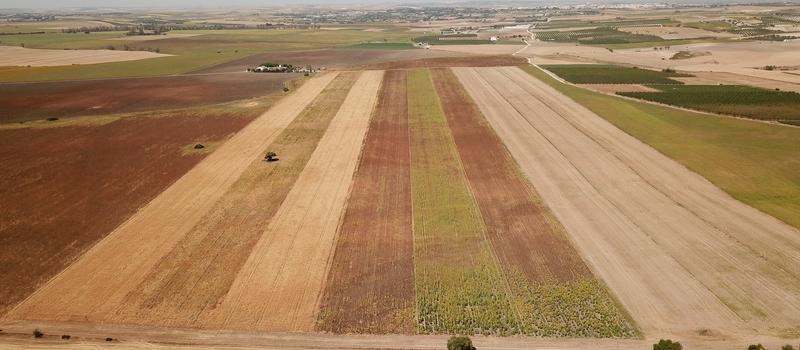 Concluye la tercera campaña del proyecto europeo en cultivos herbáceos desarrollado en fincas de Osuna y…