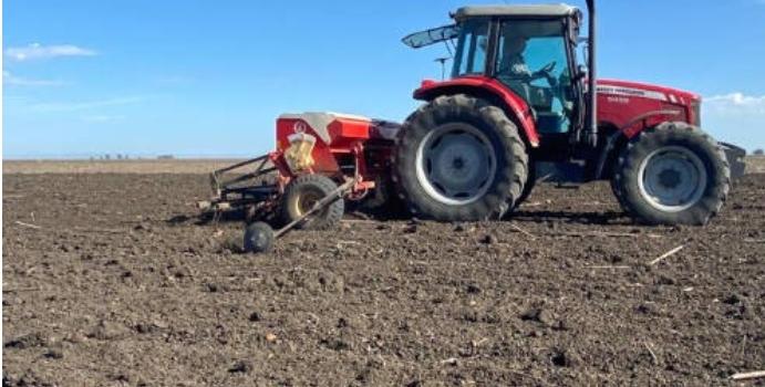 Tras las últimas lluvias Sevilla inicia la siembra de cereal