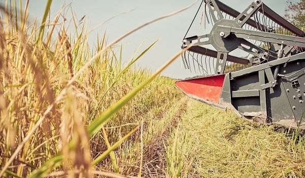 Sevilla lleva cosechada la cuarta parte de la superficie de arroz, que esta campaña es de…