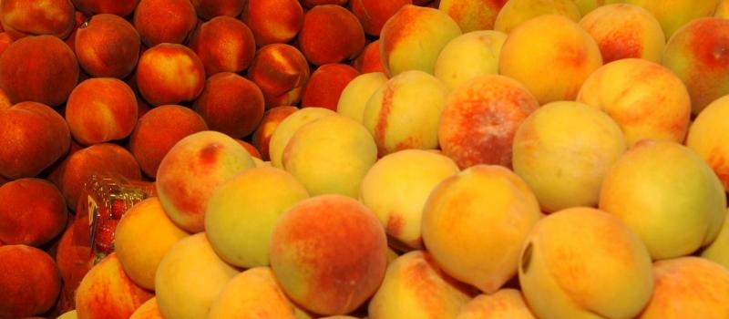 Albaricoque, melocotón y nectarina adaptan su potencial productivo a las demandas de los consumidores